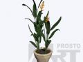 flora 06
