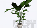 flora 15