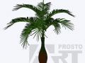 flora 21