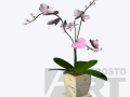 flora-24