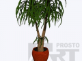 flora 31