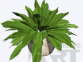 flora-32