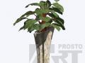 flora-35