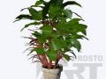 flora-40