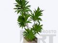 flora-46
