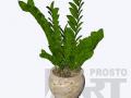 flora-50