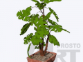 flora17