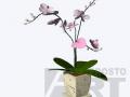 flora24