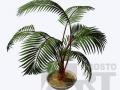 flora26