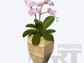 flora36